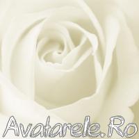 Poze Cu Trandafiri