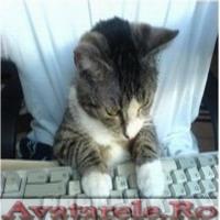 Pisica La PC