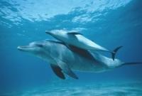 Poze cu Delfini