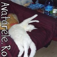 Avatare Pisici